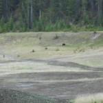 Blackbear Minnewanka Loop Rocky Mountains